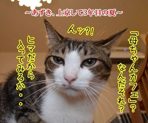 母ちゃんカフェ 猫の写真で4コマ漫画 1コマ目ッ