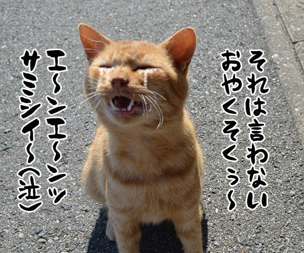猫島 其の四 猫の写真で4コマ漫画 3コマ目ッ