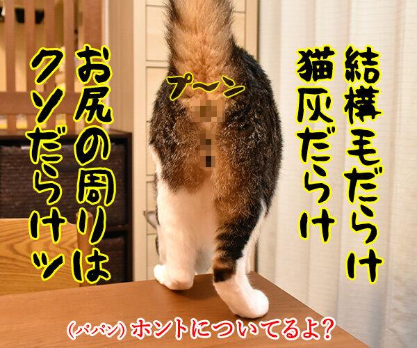 きょうは『男はつらいよ』の日なんですってッ 猫の写真で4コマ漫画 3コマ目ッ
