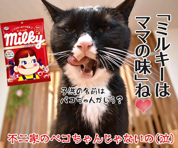 ぺこが妊娠でオメデトゴザマースッ 猫の写真で4コマ漫画 4コマ目ッ