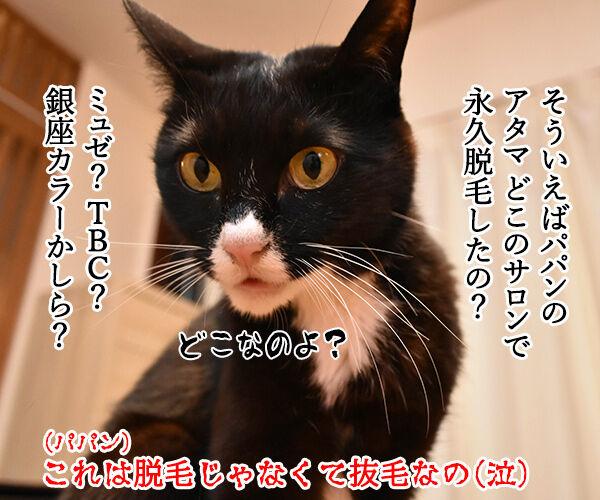 猫のエステサロンはないのかしら? 猫の写真で4コマ漫画 4コマ目ッ
