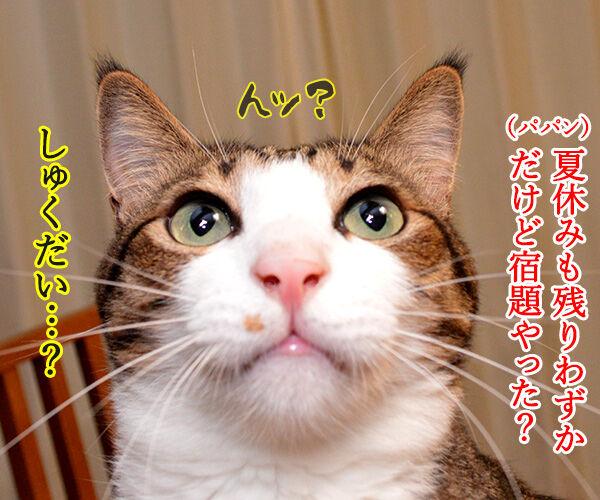 夏休みの宿題、もうやった? 猫の写真で4コマ漫画 1コマ目ッ