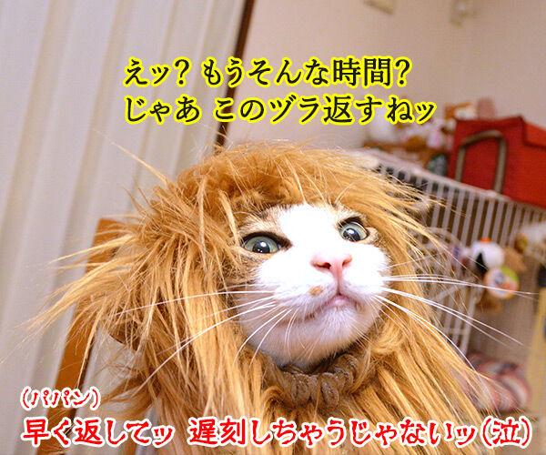 かまやつヘアーは 猫の写真で4コマ漫画 4コマ目ッ
