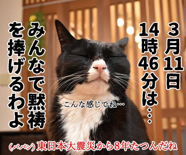 3月11日14時46分は みんなで黙祷を捧げるわよ 猫の写真で4コマ漫画 1コマ目ッ