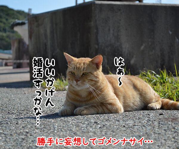 猫島 其の四 猫の写真で4コマ漫画 4コマ目ッ