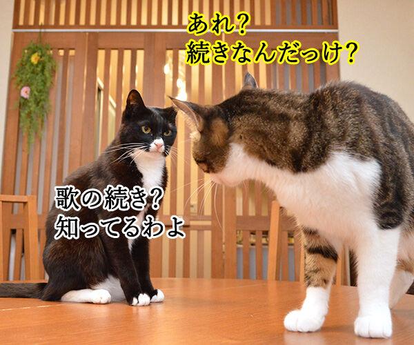今日の晩ゴハンはおさかな天国ッ 猫の写真で4コマ漫画 3コマ目ッ