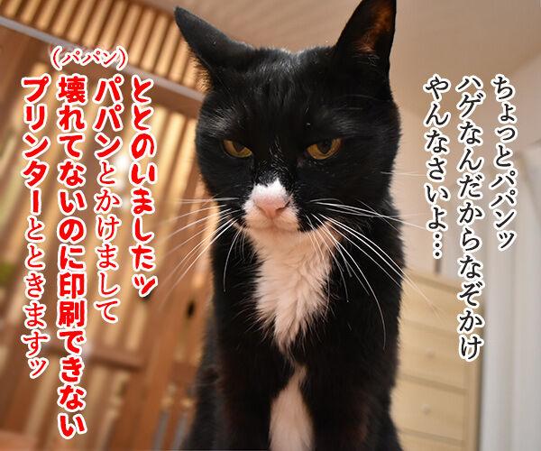 なぞかけやってみなさいよッ 猫の写真で4コマ漫画 1コマ目ッ