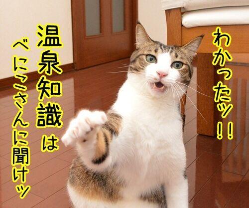 クイズ 四文字熟語ッ!! 猫の写真で4コマ漫画 3コマ目ッ