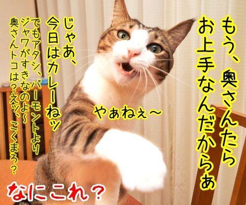 ちょっと奥さん、聞いたぁ? 猫の写真で4コマ漫画 4コマ目ッ