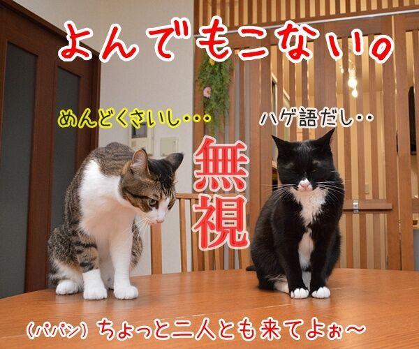 猫なんかよんでもこない。 猫の写真で4コマ漫画 2コマ目ッ