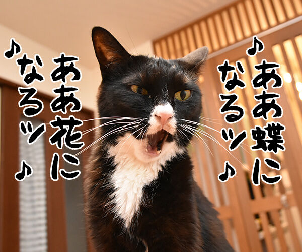 ♪うわさを信じちゃいけないよッ 猫の写真で4コマ漫画 1コマ目ッ