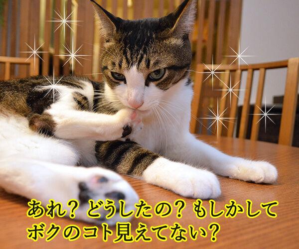 流し目王子 早乙女あずき 猫の写真で4コマ漫画 2コマ目ッ
