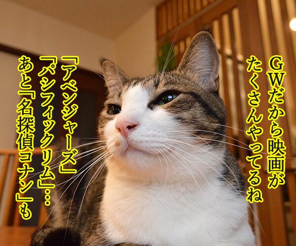 ゴールデンウィークは映画を見ようッ 猫の写真で4コマ漫画 1コマ目ッ