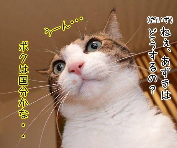 さあ、みんなで行きましょー♪ 猫の写真で4コマ漫画 1コマ目ッ