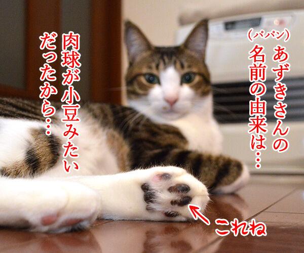 名前の由来 猫の写真で4コマ漫画 1コマ目ッ