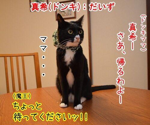 明日、ママがいない 其の二 猫の写真で4コマ漫画 2コマ目ッ