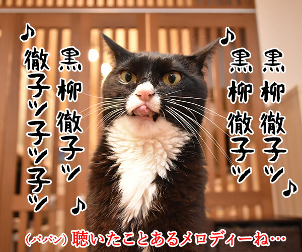 黒柳徹子の歌 猫の写真で4コマ漫画 2コマ目ッ