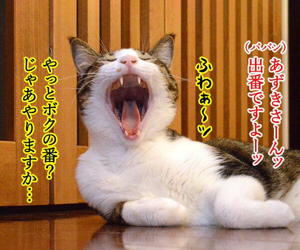 あずきさーんッ 出番ですよーッ 猫の写真で4コマ漫画 1コマ目ッ
