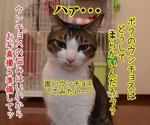 お写真撮りますッ 猫の写真で4コマ漫画 3コマ目ッ