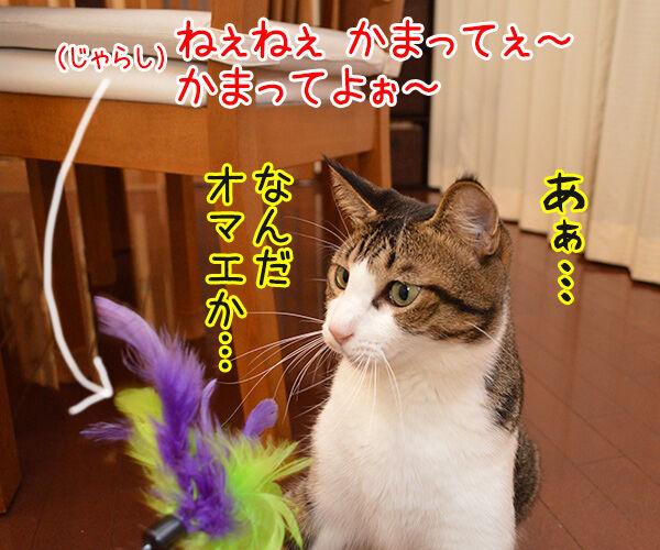 じゃらし的な彼女 猫の写真で4コマ漫画 1コマ目ッ