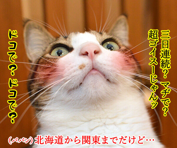 観測史上最強クラスの寒波なのッ 猫の写真で4コマ漫画 2コマ目ッ