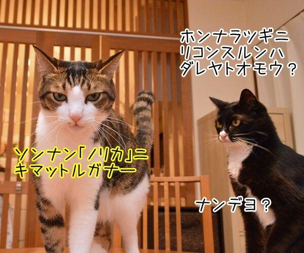 夫婦漫才 ミカとジョージ 其の八 猫の写真で4コマ漫画 3コマ目ッ