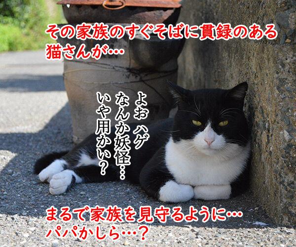 猫島 其の一 猫の写真で4コマ漫画 3コマ目ッ