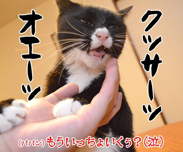 パパンのオヤツを食べちゃったからオ・シ・オ・キ❤︎ 猫の写真で4コマ漫画 4コマ目ッ