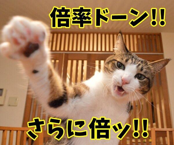 倍率ドーン!! さらに倍ッ!! 猫の写真で4コマ漫画 1コマ目ッ