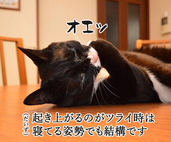 猫さんが誤飲してしまったら…? 猫の写真で4コマ漫画 3コマ目ッ