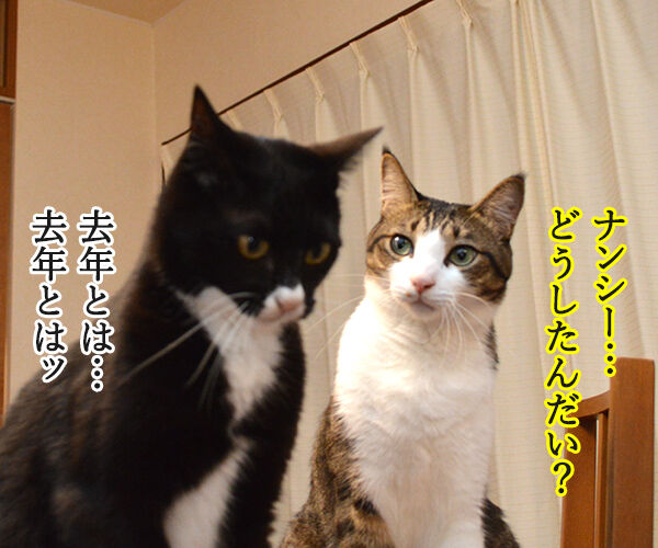 去年とは違ってるもの 猫の写真で4コマ漫画 3コマ目ッ