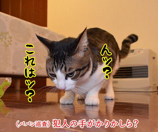 警察猫 あずき 猫の写真で4コマ漫画 3コマ目ッ