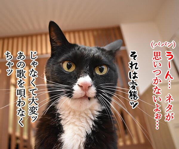 4コマのネタが思いつかない時は唄うのよッ 猫の写真で4コマ漫画 1コマ目ッ