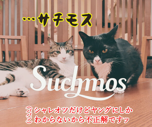 ニッチモサッチモ 猫の写真で4コマ漫画 2コマ目ッ