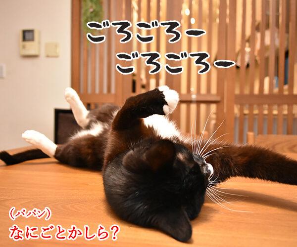 11月3日は「文化の日」で「いいお産の日」なのよッ 猫の写真で4コマ漫画 3コマ目ッ