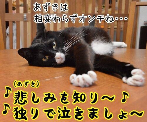 ウルトラソウル 猫の写真で4コマ漫画 2コマ目ッ