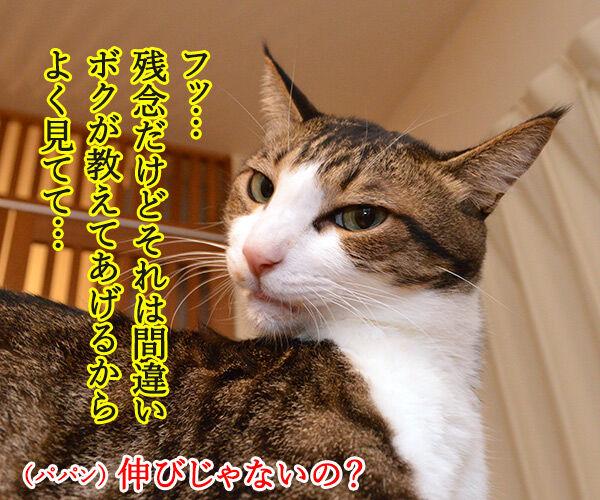 寝起きをスムーズにする方法って? 猫の写真で4コマ漫画 3コマ目ッ
