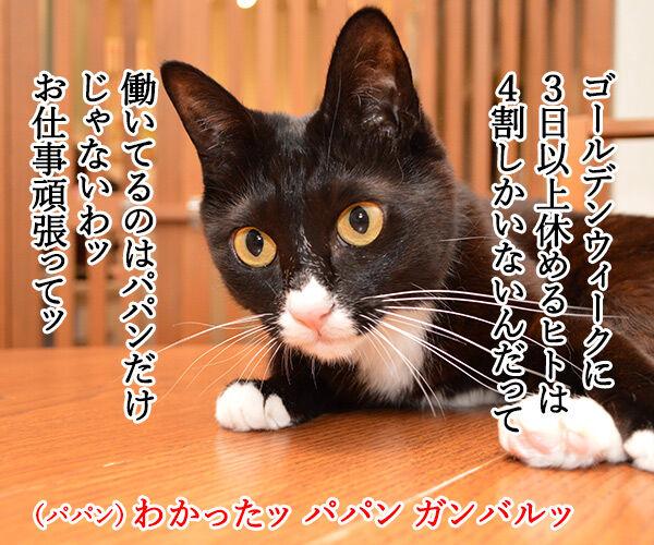 ゴールデンウィークはお仕事なの 猫の写真で4コマ漫画 3コマ目ッ