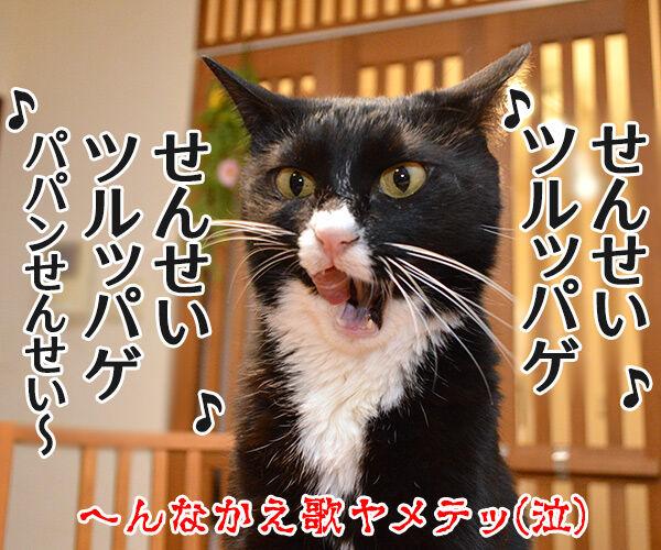 しとしと雨音は集中力をアップさせるのよッ 猫の写真で4コマ漫画 4コマ目ッ