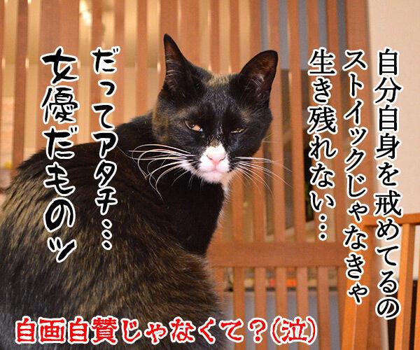 お説教 猫の写真で4コマ漫画 4コマ目ッ
