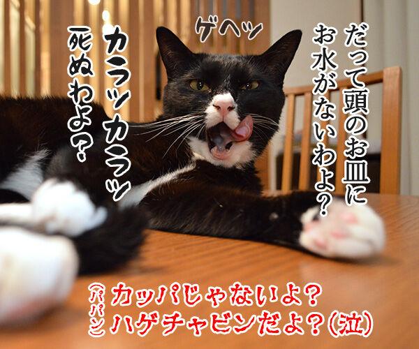 熱中症に気をつけてッ 猫の写真で4コマ漫画 4コマ目ッ