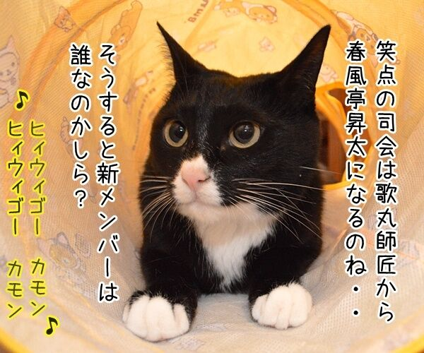「笑点」新司会は春風亭昇太さんに決定ですってッ 猫の写真で4コマ漫画 1コマ目ッ