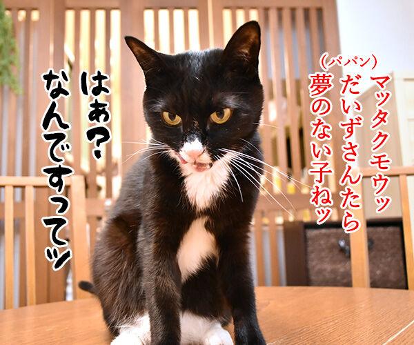 天赦日だから年末ジャンボを買ったのよッ 猫の写真で4コマ漫画 3コマ目ッ