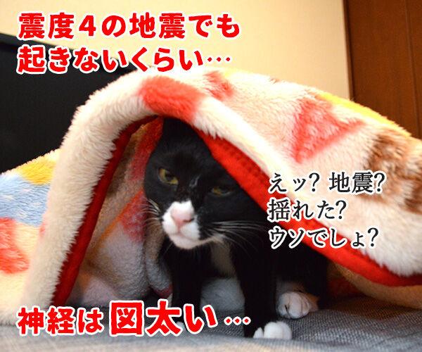 だいずさんは○○ 猫の写真で4コマ漫画 4コマ目ッ