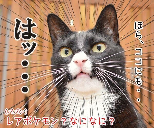 猫さんにはポケモンが見えるんですってッ 猫の写真で4コマ漫画 3コマ目ッ