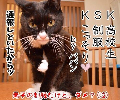 KSK 猫の写真で4コマ漫画 4コマ目ッ