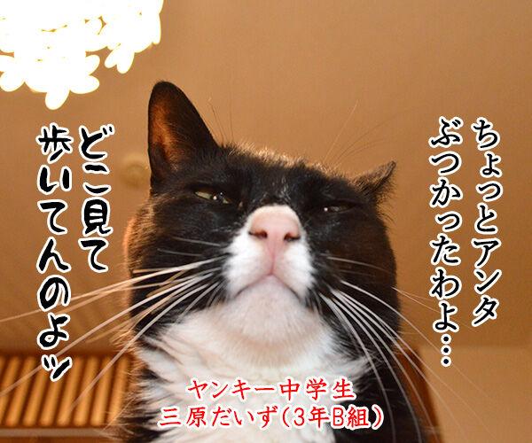 ヤンキー中学生 だいず 猫の写真で4コマ漫画 1コマ目ッ