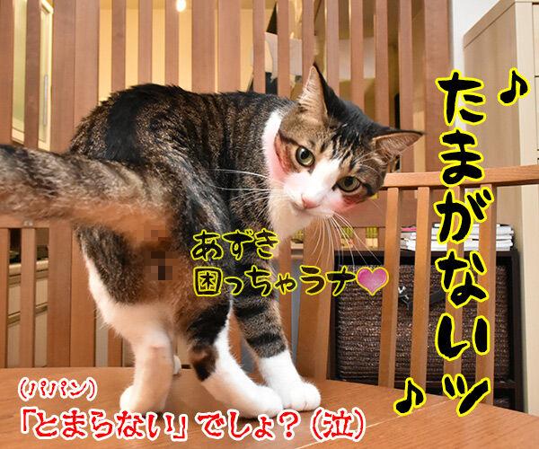 ♪うわさを信じちゃいけないよッ 猫の写真で4コマ漫画 4コマ目ッ