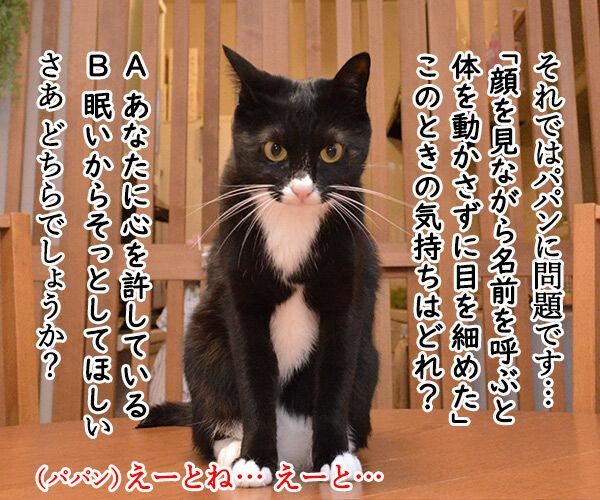 教えてッ だいず先生ッ 其の一 猫の写真で4コマ漫画 2コマ目ッ