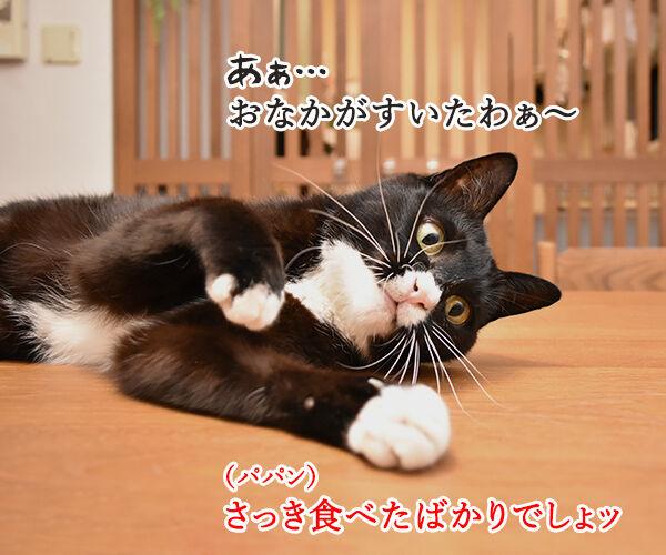 おなかがすいたらスニッカーズよねッ 猫の写真で4コマ漫画 1コマ目ッ